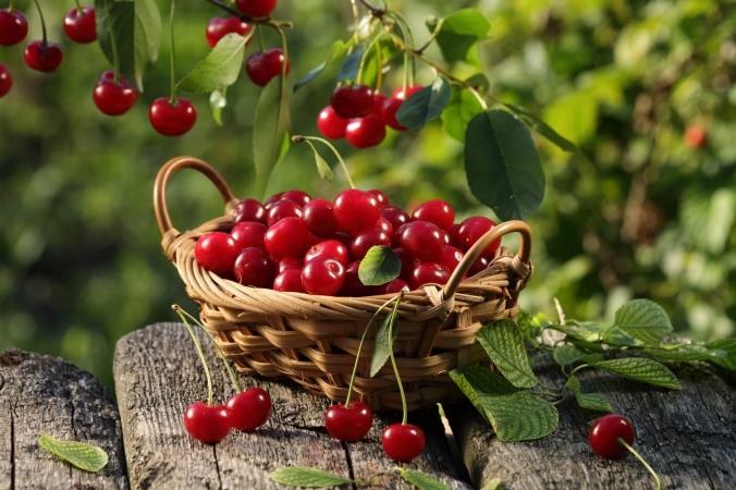 cherry-punnet